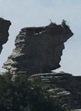Donald Trump på Gotland?